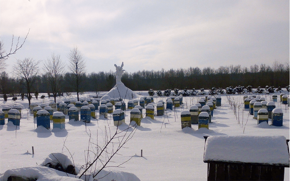 Применение цеолита для зимовки пчелиных семей