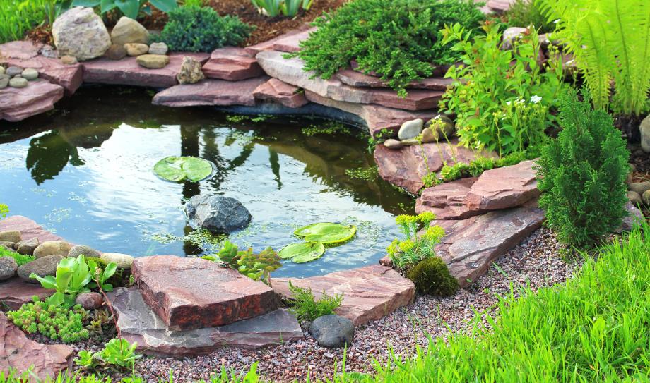 Оазис в вашем саду - очистка воды в водоёме