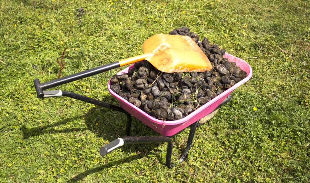 Правила удобрения почвы навозом